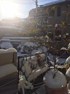 201801雪写真1.jpg